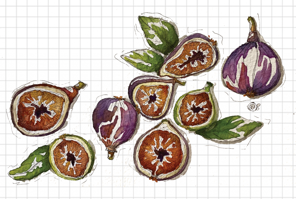 Acquerelli fichi frutta