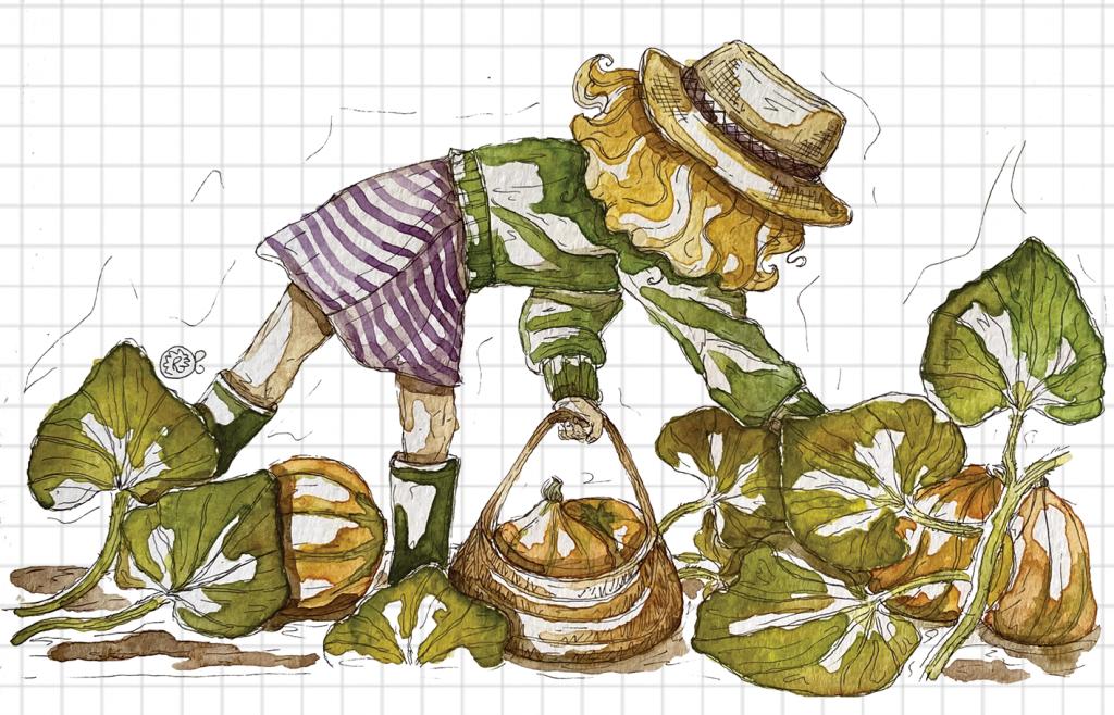 Illustrazione campo Zucche Hokkaido